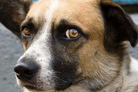 Deputados aprovam projeto que criminaliza violência contra cães e gatos