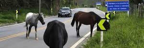 Acidente com animal em rodovia. Quem vai arcar com o prejuízo?