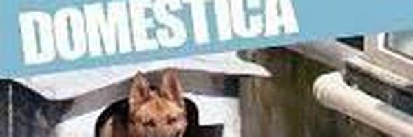 A Relação entre os maus-tratos animais e a Violência Doméstica