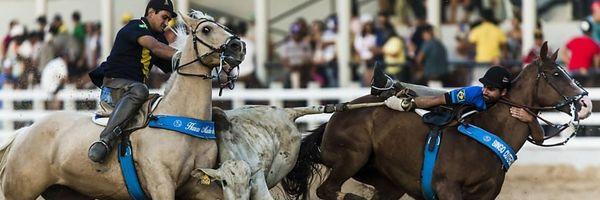 Vaquejada: Manifestação cultural ou maus tratos a animais?