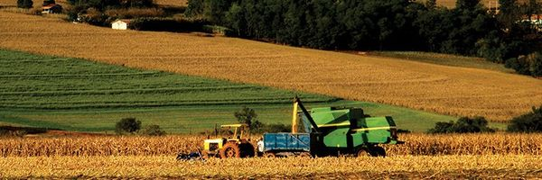Contrato de Arrendamento Rural: Nulidade de Cláusula que fixa preço em Produtos ou Frutos