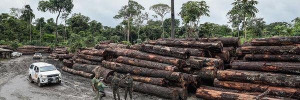 Dano ambiental: quem paga a conta?
