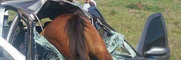 Detran e DER são condenados a indenizar esposa de homem que morreu após choque com animal