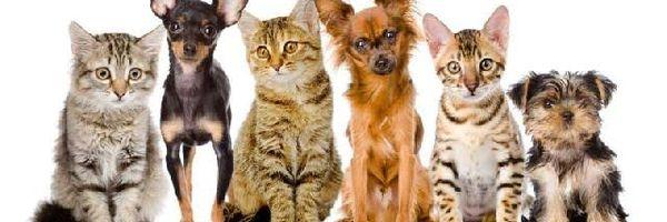 Nova lei aumenta a pena para quem maltratar cães e gatos