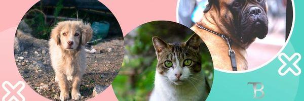 É dever de todos fiscalizar e denunciar o abandono de animais.