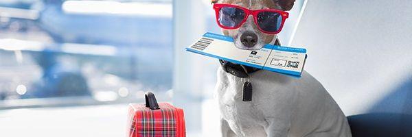 Passaporte para cães e gatos: saiba como emitir e quais as vantagens