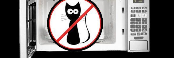 A norte-americana que pôs seu gato no micro-ondas e ficou milionária