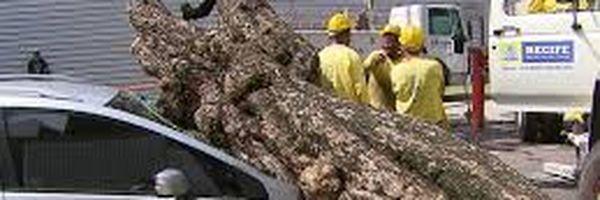 Teve prejuízo com queda de árvore sobre seu carro? Veja o que pode ser feito!