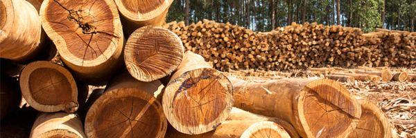Quem compra madeira ilegal do Brasil?