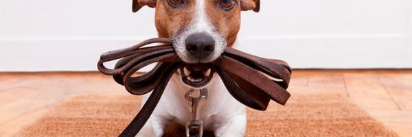 Condomínio não pode impedir circulação de cães com guia e coleira