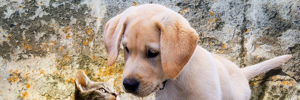 Eu posso pedir a guarda compartilhada dos nossos animais?