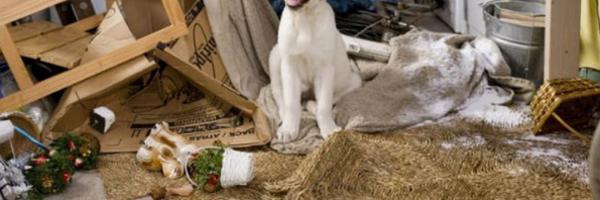 Desrespeito às regras de condomínio pode resultar no despejo de cães