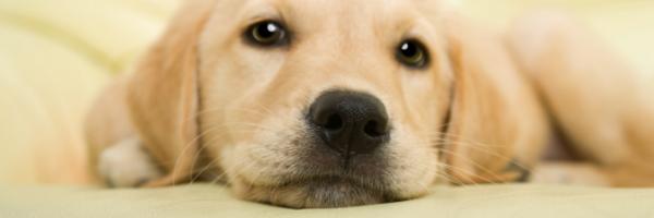 Cachorro pode herdar do seu dono ?