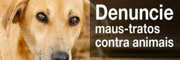 Aumento da pena para quem maltratar cães e gatos vai à sanção.