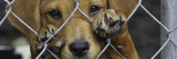 Do crime de maus-tratos aos animais