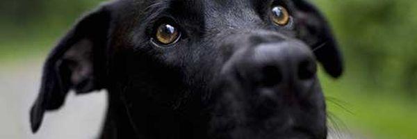 Proteção aos animais recebe alteração legislativa histórica