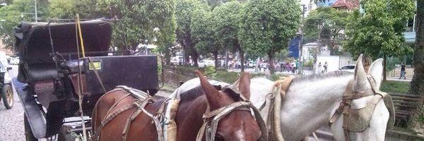 Cavalos de Petrópolis já podem descansar em santuário quando martírio acabar.