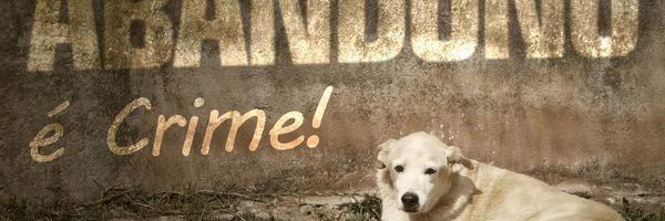 Abandono de animais domésticos, domesticados ou silvestres é crime!
