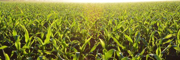 O comércio agropecuário pode continuar com suas atividades no período de quarentena?