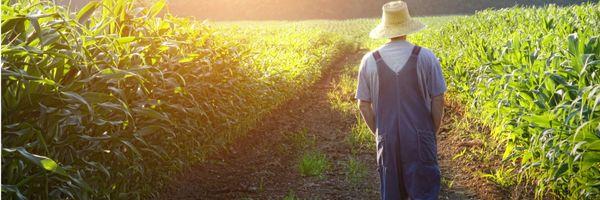 Pequena propriedade rural é impenhorável para pagamento de dívida, mesmo que constituída por mais de 1 terreno