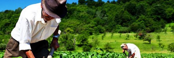 4 dicas para conseguir sua aposentadoria por idade rural