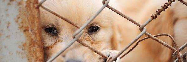 Inscrições abertas: Comissão Especial de Estudos de Direito Animal