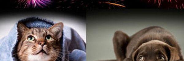 Comissão dos animais da OAB não quer fogos nas eleições