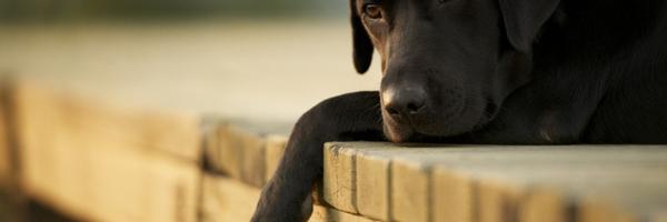 TJDFT – Turma mantém proibição de animais prevista em convenção de condomínio