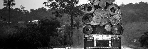 Valor de multa ambiental pode ser reduzido para R$ 50,00. Entenda!