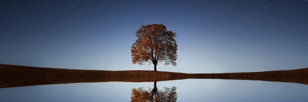 França proclama a Declaração dos Direitos das Árvores