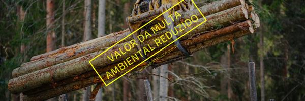 Valor da multa ambiental por hectare de desmatamento é reduzido