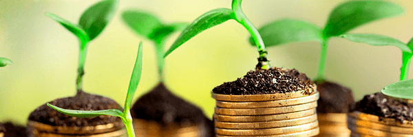Capital Semente: o caminho para o crescimento da sua startup!