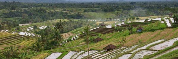 Novo código florestal autoriza o uso agrícola das várzeas
