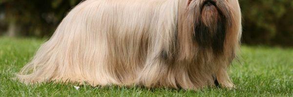 Juíza autoriza mulher a levar cachorro em cabine de avião por suporte emocional