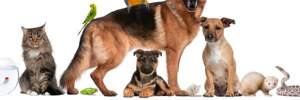 Direito de guarda e criação de animais em condomínios