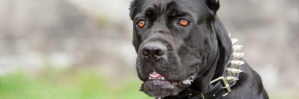 A responsabilidade civil objetiva dos donos de animais perigosos