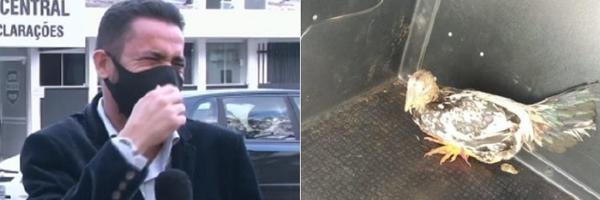 Vídeo: 'Não contive o riso', diz repórter após viralizar com notícia de galo preso