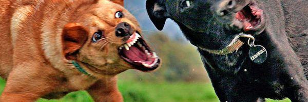 Meu cachorro foi atacado por outro cachorro, e agora?