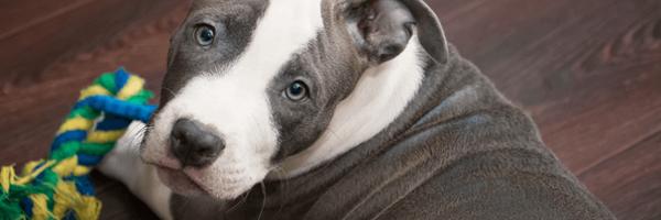 Mulher que invadiu casa para salvar cachorro é absolvida pela Justiça de SC