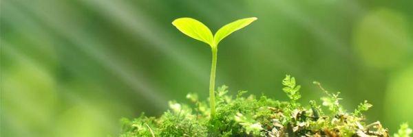 A quem compete conceder o Licenciamento Ambiental da minha empresa?