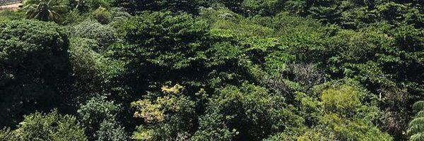 Afinal, o que é Licenciamento Ambiental?