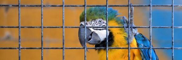 Baixa quantidade de aves silvestres em cativeiro configura crime ambiental?