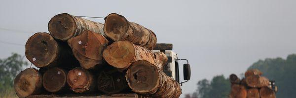 Auto de Infração Ambiental: Reincidência, Atenuantes e Agravantes