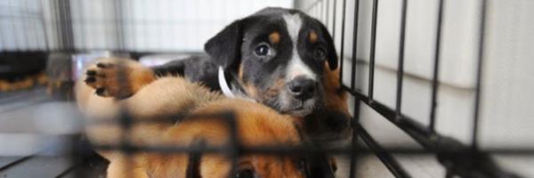 Comissão do Senado aprova proibição da venda de animais na rua