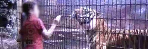 Pai de menino que teve braço amputado após ser atacado por tigre é condenado pela Justiça