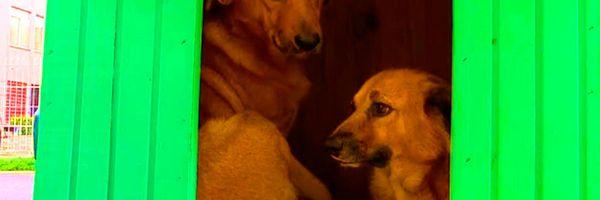 O caso das casinhas de cães em Porto Alegre (RS)