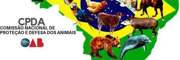 """Projeto de Lei """"Animal não é coisa"""" será pauta da OAB."""