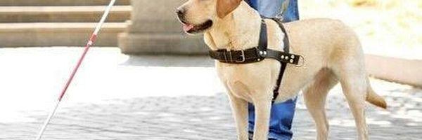 O motorista pode recusar viagens por causa do meu cão guia?