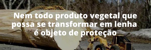 Nem toda exploração florestal configura crime ambiental