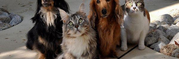 Congresso se mobiliza para proteção dos animais